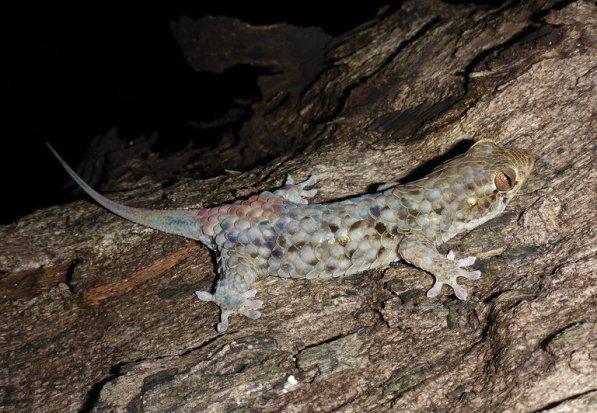 08tb-gecko1-master768