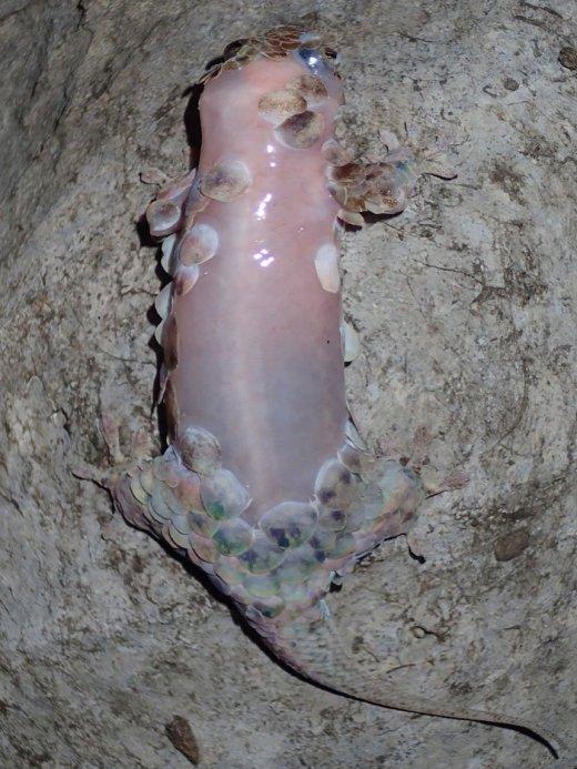132206-gecko-1