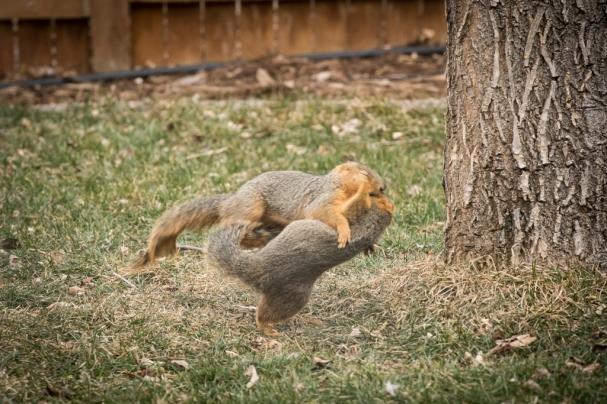 1998-squirrels-1024x
