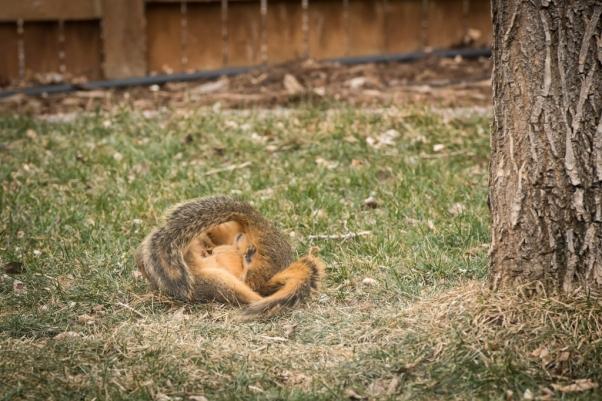 2021-squirrels-1024x