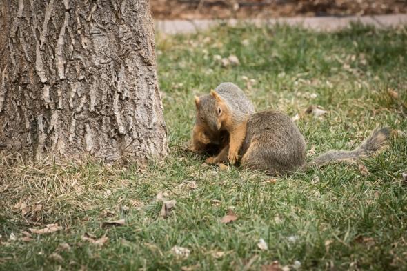 2023-squirrels-1024x