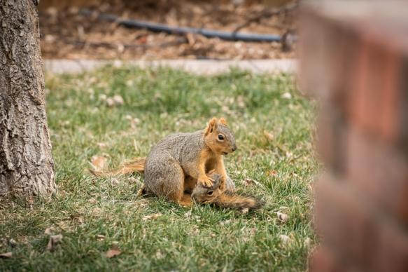 2026-squirrels-1024x