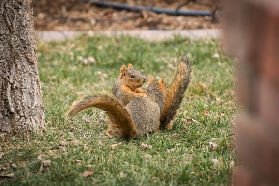 2029-squirrels-1024x
