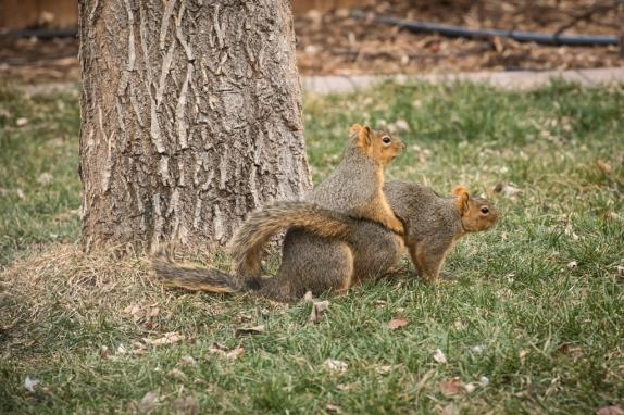 2070-squirrels-1024x
