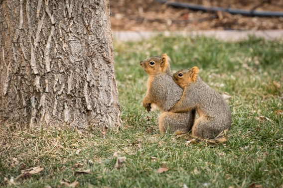 2074-squirrels-1024x
