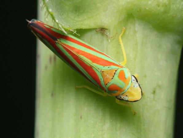 5greenhopper2