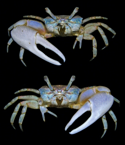 recipe: what did crabs evolve from [27]