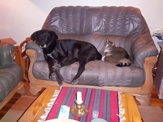 cyrus-and-hili-on-the-sofa