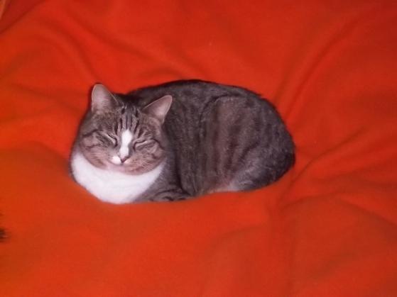 hili-on-orange-blanket