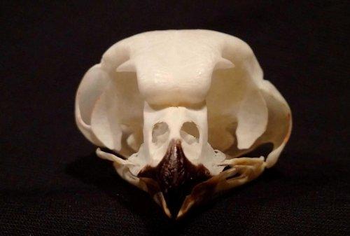 owl_skull_jim_duncan