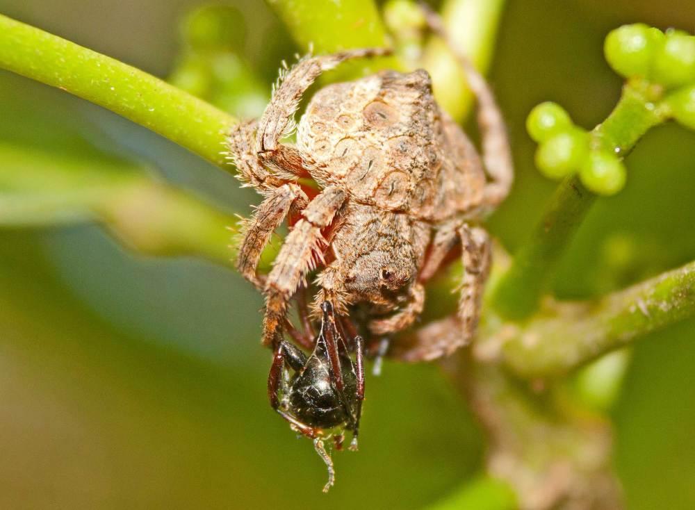 spider-vs-spider
