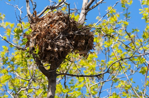squirrel-leafnest