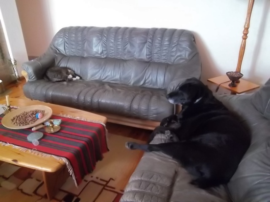 hili-and-cyrus-on-their-sofas
