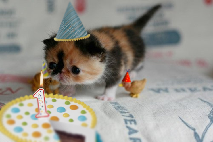 First Birthday Kitten Why Evolution Is True