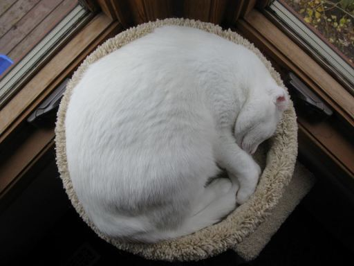 Thursday hili dialogue why evolution is true from reader charleen we have two cat tweets first two cats see a moving ceiling fan for the first time mozeypictures Image collections