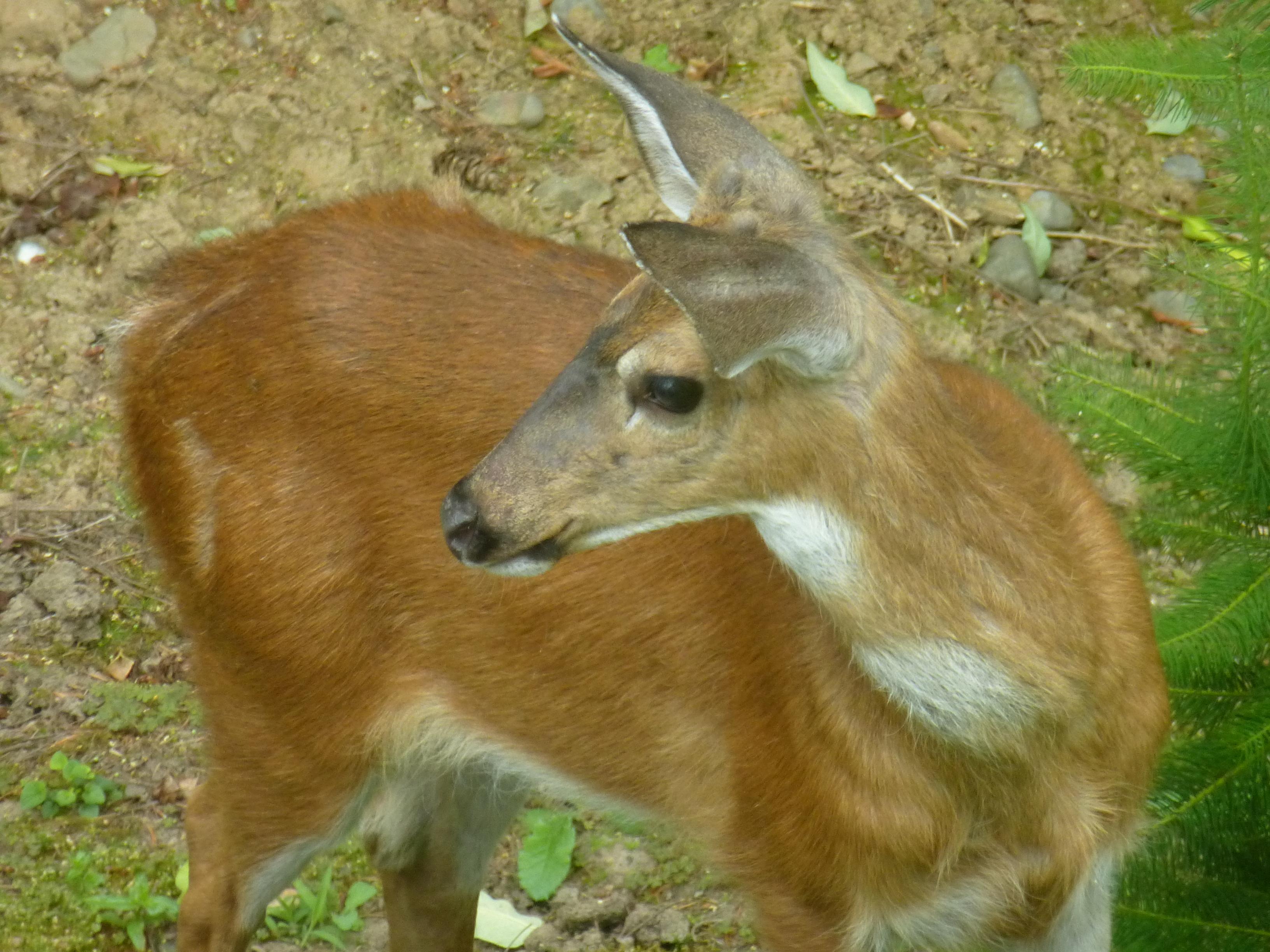 behrens wildlife madagascar barnes dp books com guides keith of amazon explorer ken control barns
