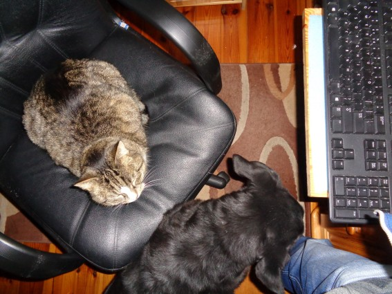 Thursday: Hili dialogue « Why Evolution Is True