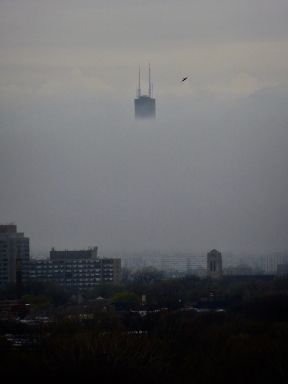 willis tower in the fog why evolution is true