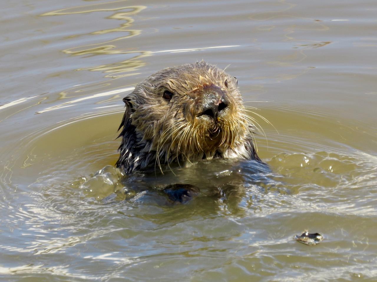 Readers' wildlife photos « Why Evolution Is True