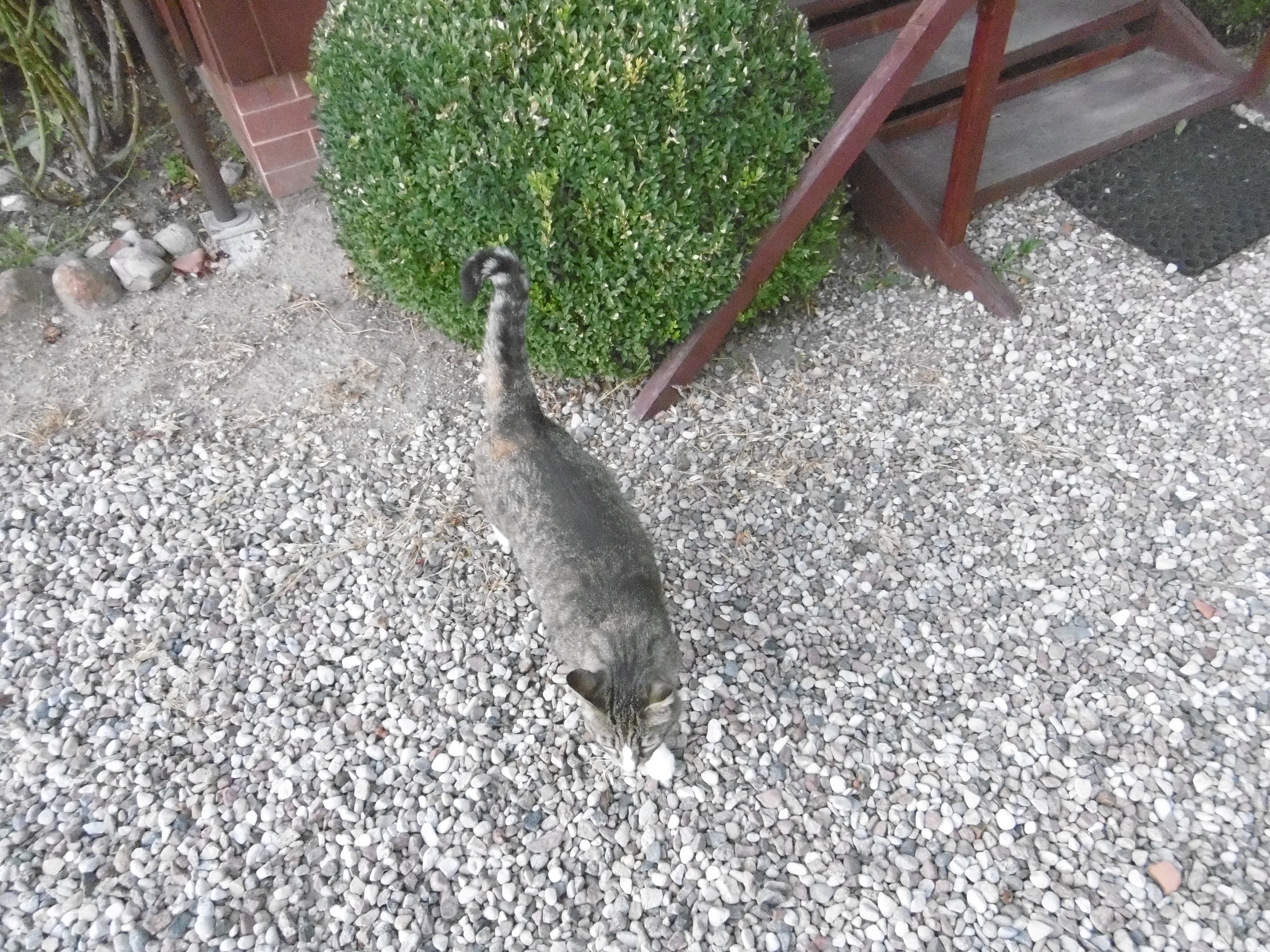 Wednesday: Hili dialogue « Why Evolution Is True