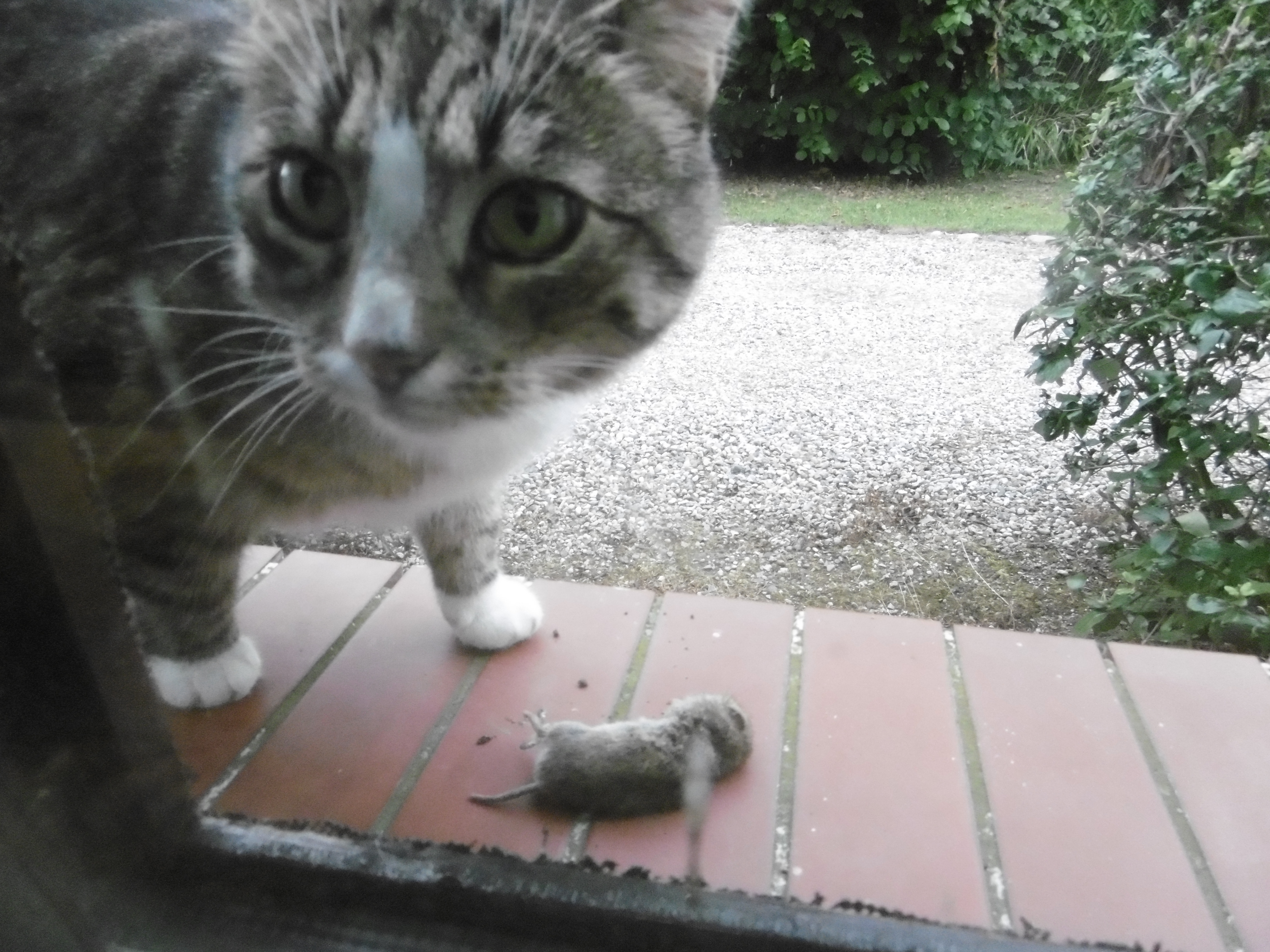 Monday: Hili dialogue « Why Evolution Is True